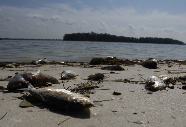 Red tide found in samples along pinellas county beaches for Tides for fishing sarasota