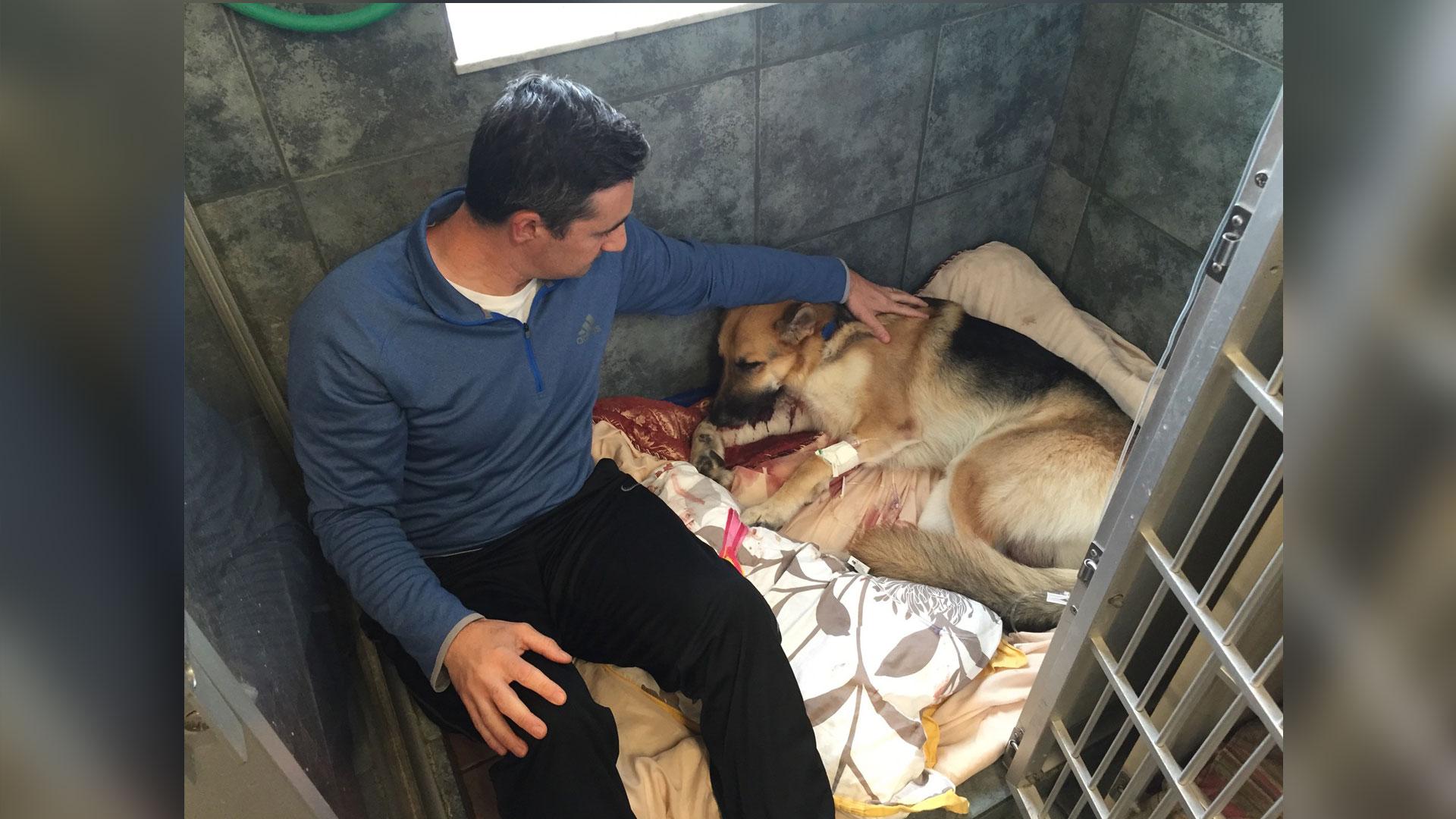 Hero dog saves 7 year old girl from rattlesnake for Dog haus dog beds