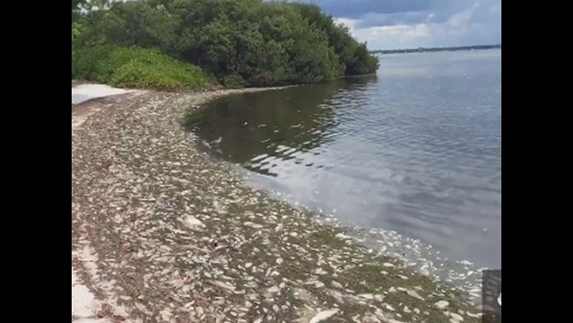 Hurricane matthew may help break up red tide along the for Tides for fishing sarasota