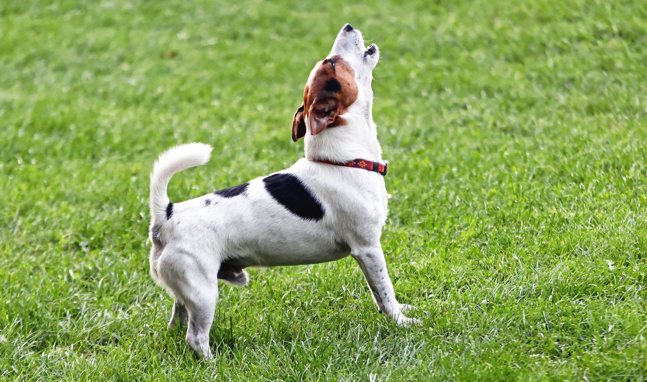 Stop A Dog Barking When Alone
